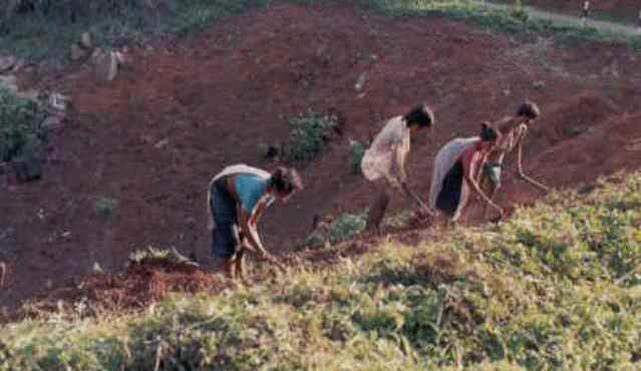 Shifting cultivation degrades CHT ecology!